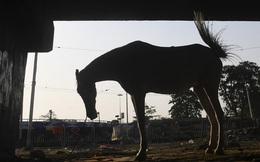 Hàng trăm người Ấn Độ vi phạm quy tắc phòng dịch để dự đám tang 'ngựa thần'
