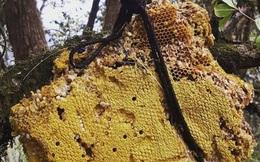 Giải mã thứ mật ong có thể khiến cả đoàn quân gặp ảo giác, choáng váng