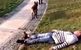 Đang dắt chó đi dạo, người đàn ông vờ ngã lăn ra đường, phản ứng của thú cưng mới là điều đáng chú ý