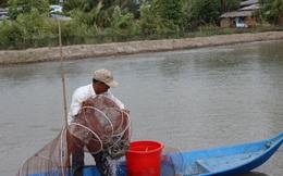 Đặt lú đuôi chuột bắt hàng chục kg cá kèo ở Cà Mau