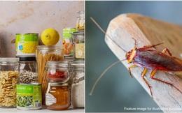 """7 công thức từ những nguyên liệu sẵn có trong bếp sẽ giúp lũ gián nhà bạn """"một đi không trở lại"""""""