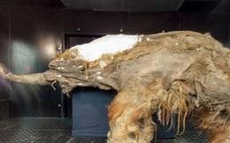 Siberia xuất hiện những sinh vật tiền sử từ 40 nghìn năm trước, các chuyên gia nghiên cứu: Đây không phải là tín hiệu tốt