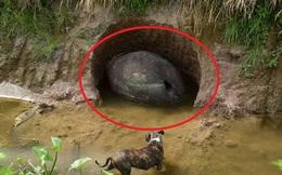 Phát hiện vật thể kỳ dị nằm gọn trong 1 cái hố, nam thanh niên hí hửng tưởng tìm được trứng khủng long nhưng sự thật lại không phải vậy