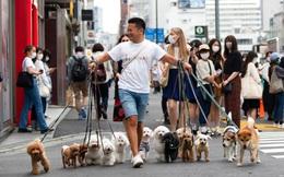 24h qua ảnh: Người đàn ông Nhật Bản dắt cả đàn chó đi dạo trên phố