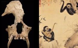 Khai quật lăng mộ bà nội Tần Thủy Hoàng, chuyên gia sửng sốt khi phát hiện những thứ bên trong