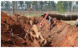 Đang đào đất thì phát hiện thấy điều bất thường, xới hết đất xung quanh lên, chủ trang trại ngỡ ngàng với thứ được tìm thấy