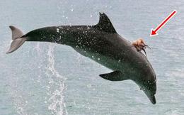 Cá heo liên tục nhảy lên khỏi mặt nước với tần suất bất thường, nhiều người rùng mình khi nhìn thấy thứ ghê rợn này trên lưng con vật