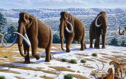 Xương voi ma mút thời kỷ Băng hà quý hiếm được tìm thấy ở Florida