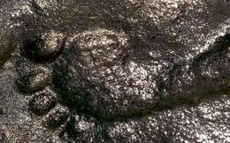 Phát hiện bí ẩn gây chấn động về dấu vết người đàn ông 290 triệu năm tuổi