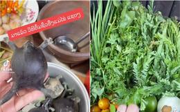 """Người Thái sở hữu 1 món """"siêu kinh dị"""", có người vừa thấy đã """"ngất xỉu"""" tại chỗ nhưng ở Việt Nam cũng ăn con vật này?"""
