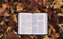 Những người không đọc sách, rốt cuộc là thua ở đâu? Thua mọi mặt!