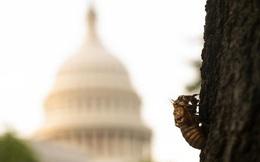 Máy bay chở phóng viên Nhà Trắng tháp tùng ông Biden bị ve sầu tấn công