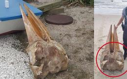 Hộp sọ bí ẩn dạt vào bờ biển khiến dân tình xôn xao tưởng là chim khổng lồ, để rồi ngã ngửa khi biết sự thật