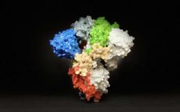 Chuyên gia WHO: Thời gian bảo vệ của một liều vắc xin mRNA Covid-19 có thể kéo dài mấy năm