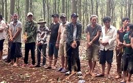 Hàng chục đối tượng tổ chức đá gà ăn tiền trong rừng cao su giữa mùa dịch