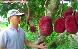 Thanh niên Trung Quốc khoe giống mít vỏ đỏ khiến dân mạng sửng sốt, ở Việt Nam cũng từng xuất hiện loại mít này nhưng thực hư thế nào?