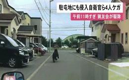 Video: Gấu nâu đại náo thành phố Nhật Bản, tấn công doanh trại quân đội
