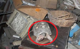 Thất lạc rùa cưng suốt 30 năm, cả gia đình không khỏi sửng sốt khi tìm thấy con vật ở nơi không thể ngờ tới