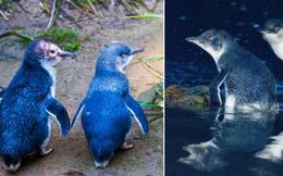 Hơn 6000 con chim cánh cụt bị quét sạch tại một hòn đảo vì sự xuất hiện của một con quỷ