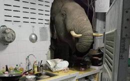 Nghe thấy tiếng động lớn, chủ nhà xuống bếp để kiểm tra, đứng hình với cảnh tượng trước mắt