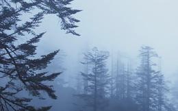 Có một ngọn núi bí ẩn ở Tứ Xuyên khiến những ai tiến vào đều phát điên hoặc tử nạn, rốt cuộc ở đây có gì?
