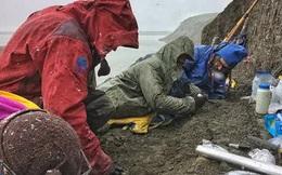 Kinh hoàng vườn ươm 7 loài quái thú đầy con non ở Bắc Cực
