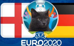 Mèo tiên tri dự đoán Anh vs Đức: Gợi ý đáng lưu tâm