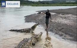 """Video: Liều mạng """"dụ"""" cá sấu hoang dã khổng lồ dài hơn 5 mét lên bờ rồi cho ăn"""