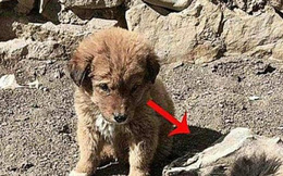 Chú chó nhỏ liên tục sủa vào mặt đất, chủ nhân đào xuống vị trí đó thì thấy cảnh tượng ngỡ ngàng