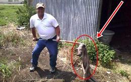 Vô tình giết chết 1 con vật, người đàn ông sởn gai ốc sau khi nghe kết luận của chuyên gia