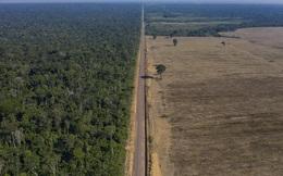 Kỷ lục 1.180 km² rừng Amazon tại Brazil bị phá hủy trong tháng 5