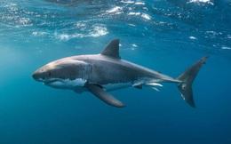 Sự kiện bí ẩn cách đây 19 triệu năm gần như xóa sổ loài cá mập trên Trái Đất