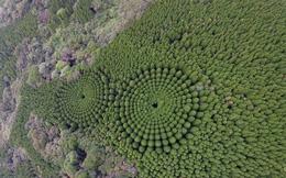 Những vòng tròn cây kỳ lạ ở Nhật có phải sản phẩm của người ngoài hành tinh?