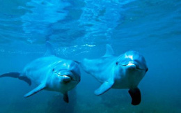 Hải quân Anh bị chỉ trích vì kích hoạt các vụ nổ khiến cá heo, cá voi bị điếc