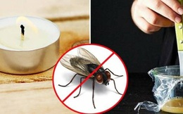 5 mẹo đuổi ruồi sạch bách ra khỏi nhà, không lo tốn kém