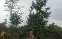Người phụ nữ bị điện giật tử vong trong lúc trèo lên cây hái lá cho dê ăn