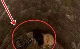 Thấy 2 chú chó con bị kẹt trong giếng, đang định xuống cứu, người đàn ông bỗng lạnh sống lưng, quyết định bỏ đi để giữ lấy mạng