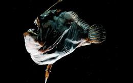 6 loài sinh vật này cho chúng ta thấy thế giới tự nhiên có thể trở nên kỳ dị như thế nào