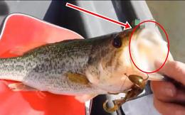 Câu được 1 con cá có phần miệng kỳ lạ, tò mò cậy ra xem, người đàn ông rùng mình khi thấy cảnh tượng bên trong