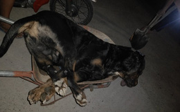 Rắn bò vào nhà, chú chó lao ra bảo vệ chủ và cái kết đau lòng sau 10 phút