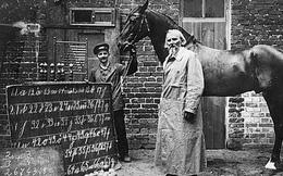 Đây là Hans - chú ngựa từng gây bão lịch sử nhân loại: Biết làm toán, ''nói'' được tiếng Đức và có một cái kết buồn