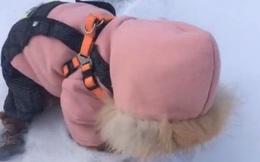 Thấy đứa trẻ bò một mình trên tuyết nên vội chạy đến giúp, người phụ nữ được phen tẽn tò khi tiếp cận đối phương