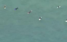Clip: Thót tim đàn cá mập bơi xung quanh người lướt sóng rình mồi mà không ai hay biết