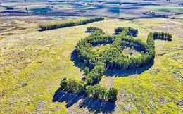 Khu vườn bạch đàn kết thành hình thù độc lạ nổi tiếng nhờ Google Earth