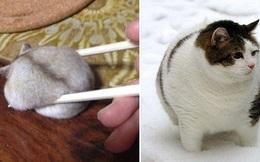 20 chú động vật béo tròn núc ních, có thể vẽ lại hoàn toàn bằng 1 chiếc compa