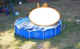 Chuẩn bị bể bơi để giải nhiệt mùa hè, gia chủ tái mặt khi thấy những vị khách không mời này