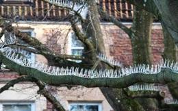 Đóng đinh chi chít lên cái cây trước nhà, người đàn ông chỉ vào chiếc xe của mình giải thích lý do khiến tất cả ngỡ ngàng