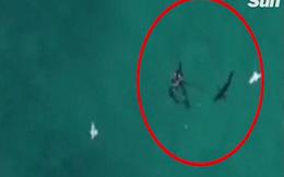 Úc: Ngồi ban công cho flycam lượn trên biển, phát hiện cảnh hãi hùng