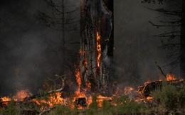 Lái xe qua khu vực cháy rừng, người đàn ông chứng kiến cảnh tượng ngỡ ngàng trên cây, vừa mừng vừa xót xa