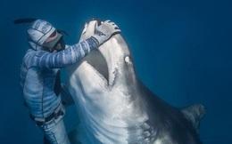 Chùm ảnh: Rùng mình cảnh thợ lặn chơi đùa, âu yếm cá mập hổ khổng lồ
